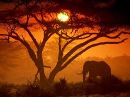 Izlet v Kenijo