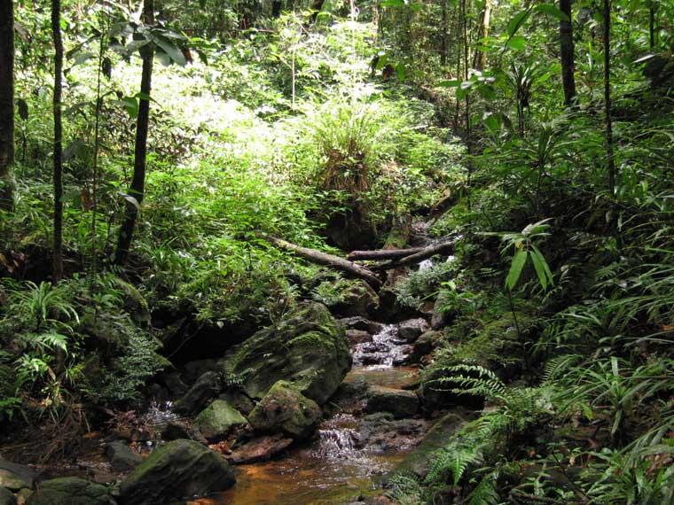 tropski gozdovi